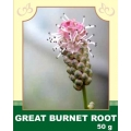 Great Burnet Root 50g