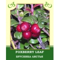 Foxberry Leaf 35g
